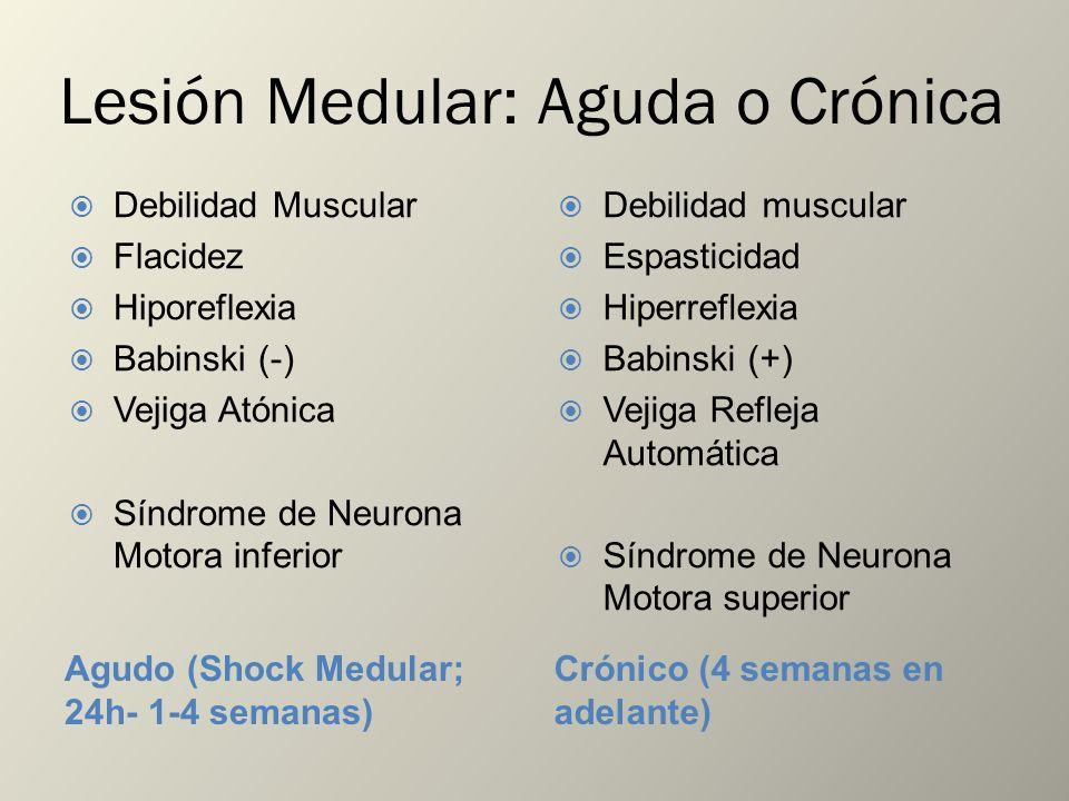 Lesión Medular: Aguda o Crónica Agudo (Shock Medular; 24h- 1-4 semanas) Crónico (4 semanas en adelante) Debilidad Muscular Flacidez Hiporeflexia Babin