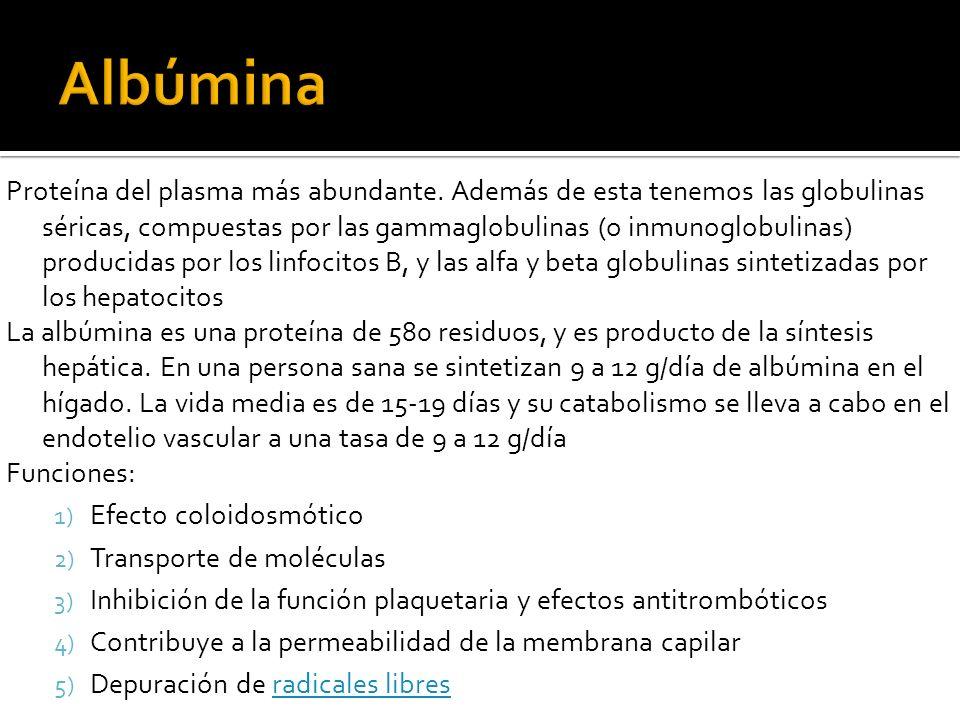 Proteína del plasma más abundante. Además de esta tenemos las globulinas séricas, compuestas por las gammaglobulinas (o inmunoglobulinas) producidas p