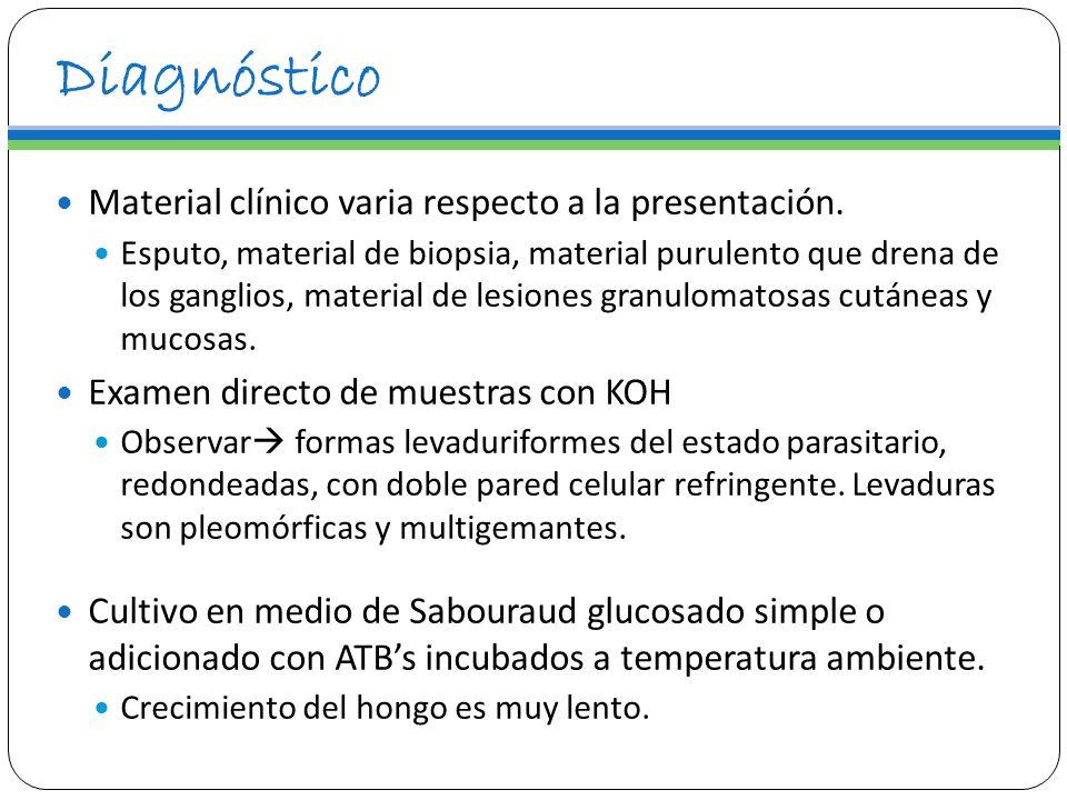 Diagnóstico Material clínico varia respecto a la presentación. Esputo, material de biopsia, material purulento que drena de los ganglios, material de