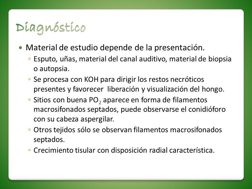 Material de estudio depende de la presentación. Esputo, uñas, material del canal auditivo, material de biopsia o autopsia. Se procesa con KOH para dir