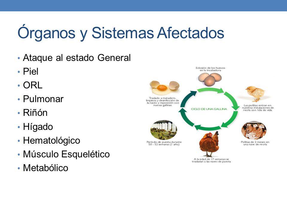 Órganos y Sistemas Afectados Ataque al estado General Piel ORL Pulmonar Riñón Hígado Hematológico Músculo Esquelético Metabólico