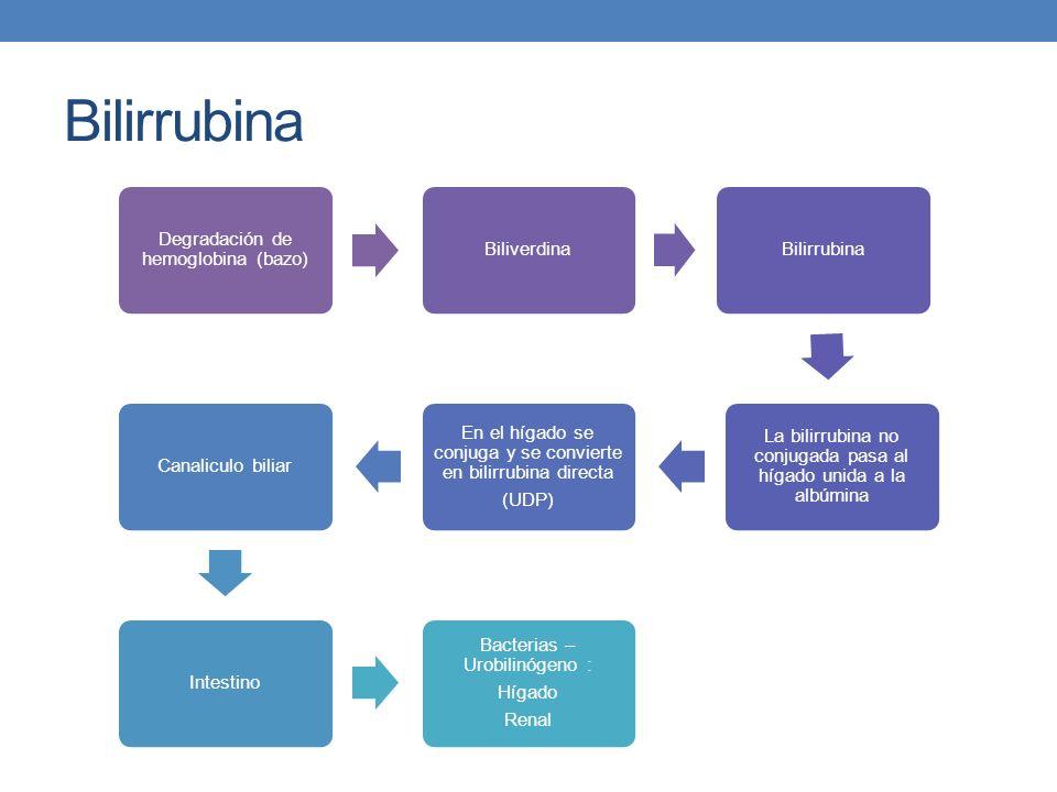 Bilirrubina Degradación de hemoglobina (bazo) BiliverdinaBilirrubina La bilirrubina no conjugada pasa al hígado unida a la albúmina En el hígado se co