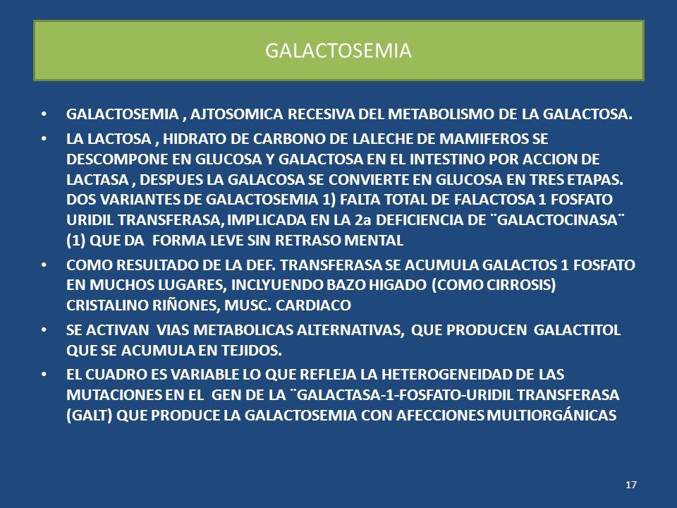 GALACTOSEMIA GALACTOSEMIA, AJTOSOMICA RECESIVA DEL METABOLISMO DE LA GALACTOSA. LA LACTOSA, HIDRATO DE CARBONO DE LALECHE DE MAMIFEROS SE DESCOMPONE E