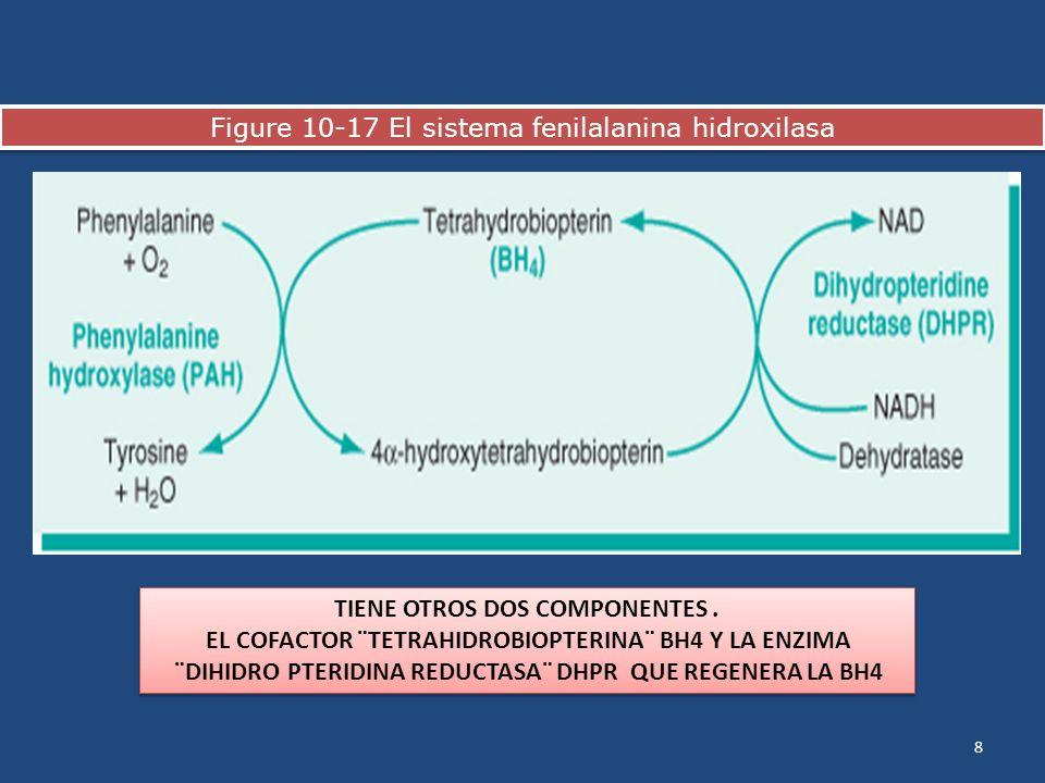 Figure 10-17 El sistema fenilalanina hidroxilasa 8 TIENE OTROS DOS COMPONENTES. EL COFACTOR ¨TETRAHIDROBIOPTERINA¨ BH4 Y LA ENZIMA ¨DIHIDRO PTERIDINA