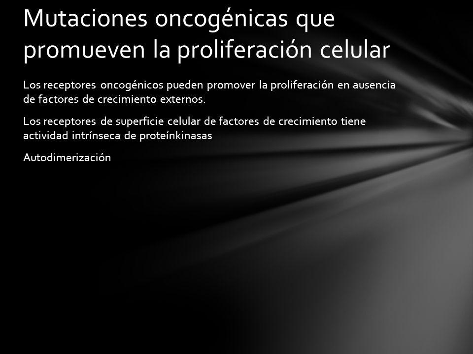 Los receptores oncogénicos pueden promover la proliferación en ausencia de factores de crecimiento externos. Los receptores de superficie celular de f