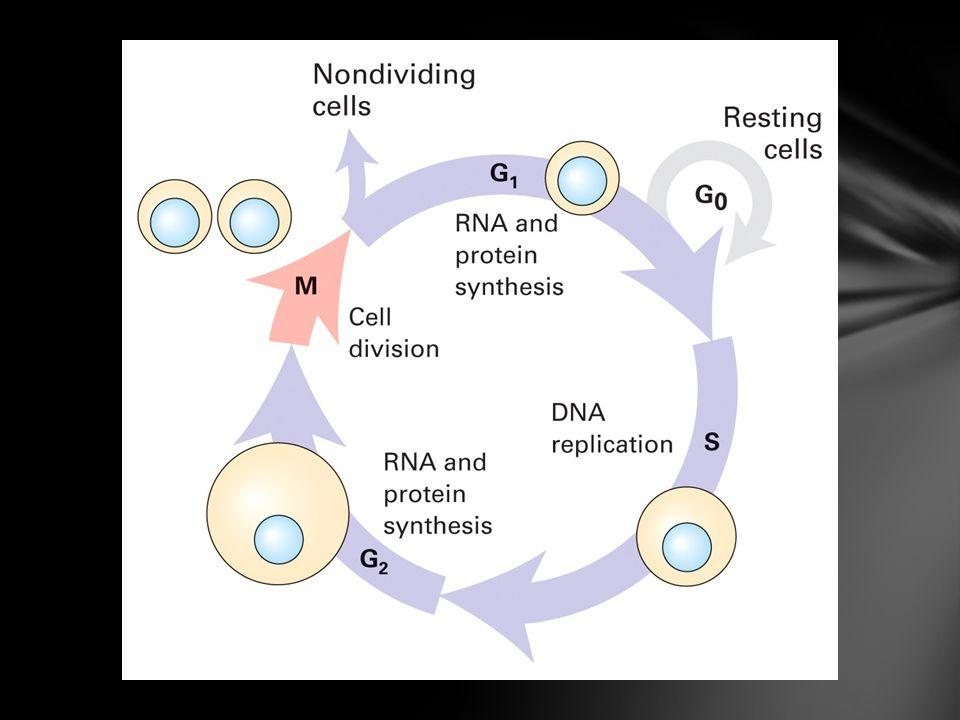 Se requiere que las células estén en división Que las nuevas mutaciones se hereden a sus células hijas.