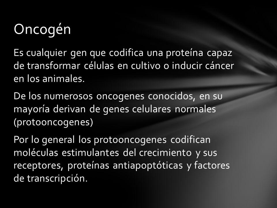 Es cualquier gen que codifica una proteína capaz de transformar células en cultivo o inducir cáncer en los animales. De los numerosos oncogenes conoci