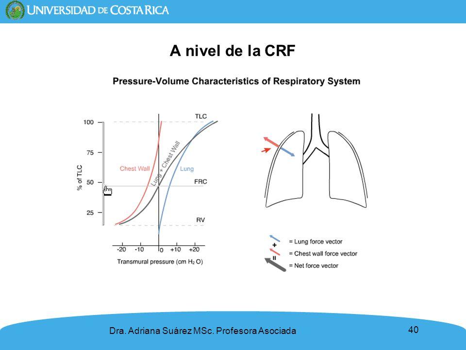 40 A nivel de la CRF Dra. Adriana Suárez MSc. Profesora Asociada
