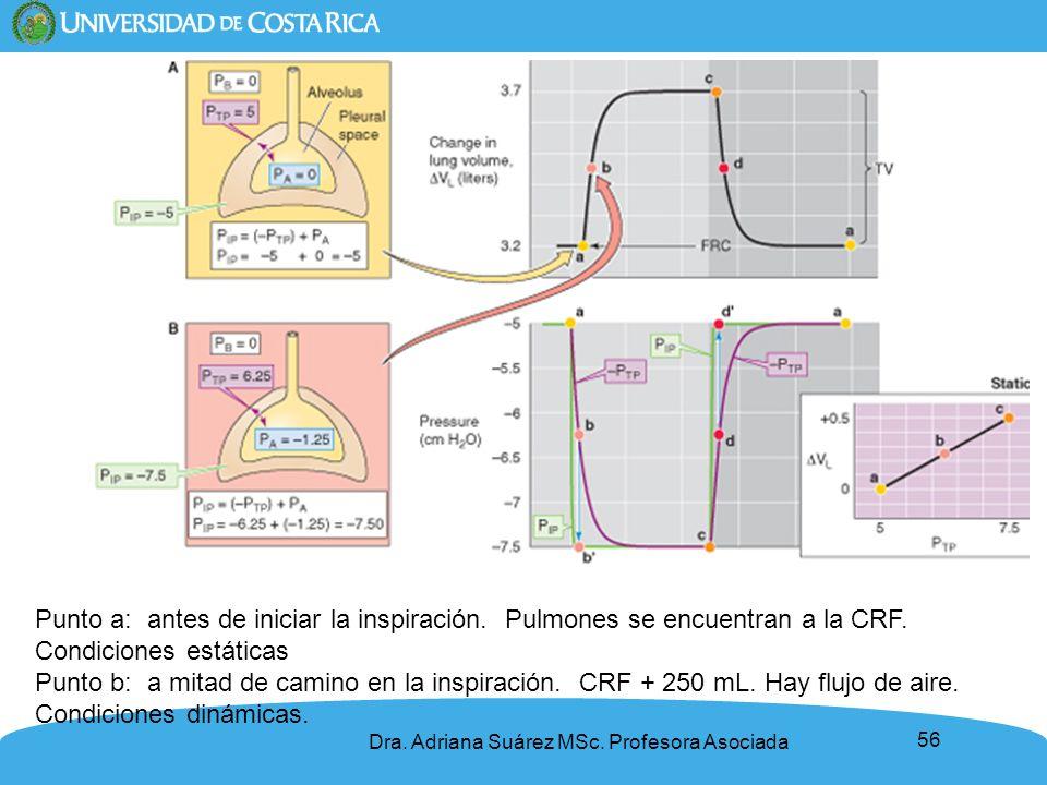 56 Punto a: antes de iniciar la inspiración. Pulmones se encuentran a la CRF. Condiciones estáticas Punto b: a mitad de camino en la inspiración. CRF