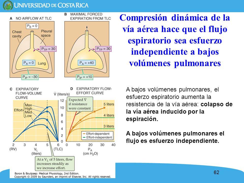 62 Compresión dinámica de la vía aérea hace que el flujo espiratorio sea esfuerzo independiente a bajos volúmenes pulmonares A bajos volúmenes pulmona