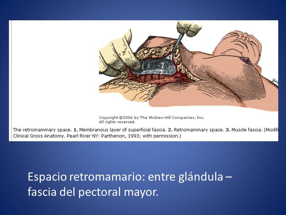 Espacio retromamario: entre glándula – fascia del pectoral mayor.