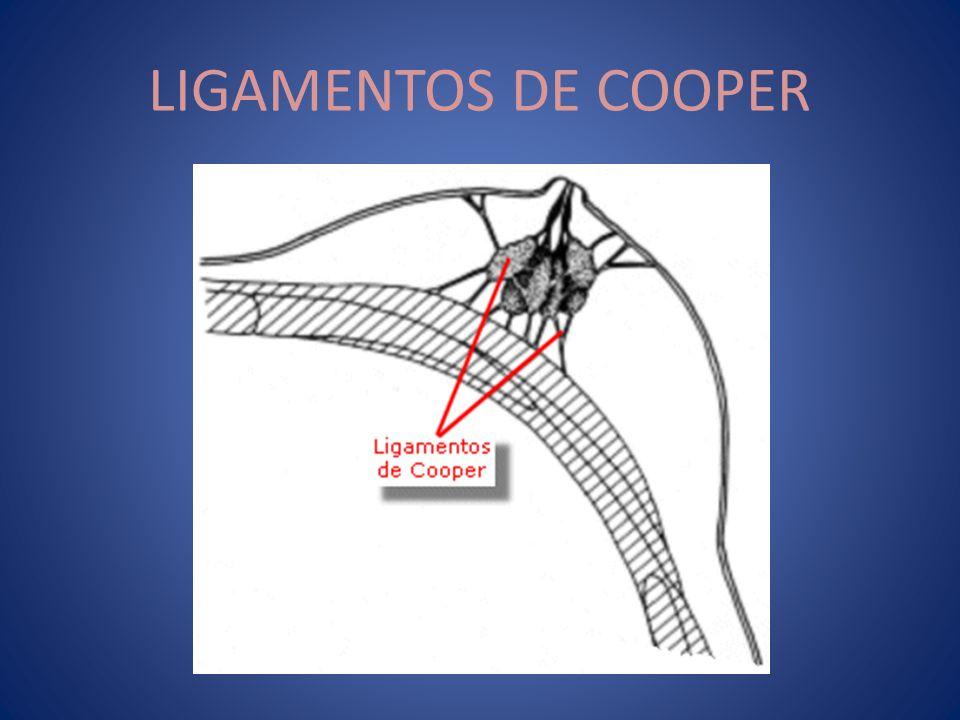 LIGAMENTOS DE COOPER