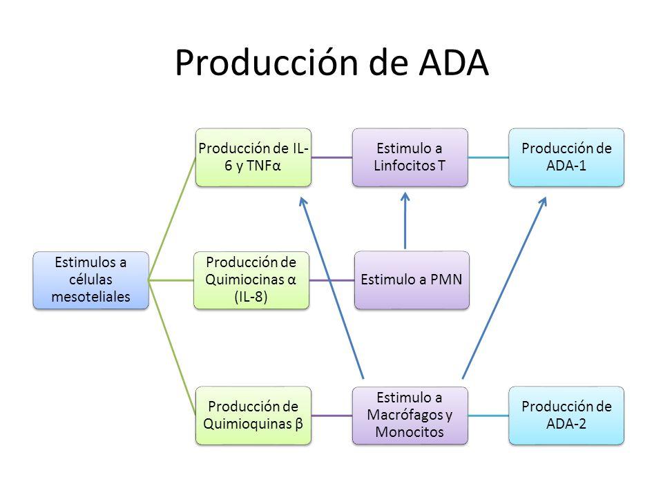 Producción de ADA Estimulos a células mesoteliales Producción de IL- 6 y TNFα Estimulo a Linfocitos T Producción de ADA-1 Producción de Quimiocinas α