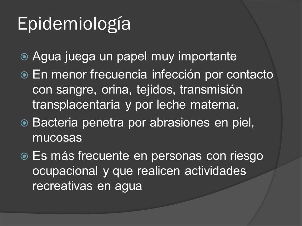Epidemiología Agua juega un papel muy importante En menor frecuencia infección por contacto con sangre, orina, tejidos, transmisión transplacentaria y