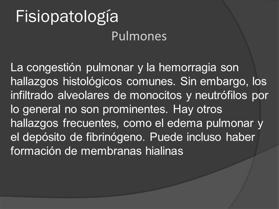 Fisiopatología La congestión pulmonar y la hemorragia son hallazgos histológicos comunes. Sin embargo, los infiltrado alveolares de monocitos y neutró