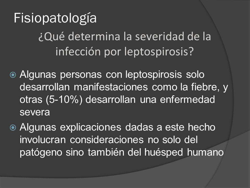 Fisiopatología Algunas personas con leptospirosis solo desarrollan manifestaciones como la fiebre, y otras (5-10%) desarrollan una enfermedad severa A