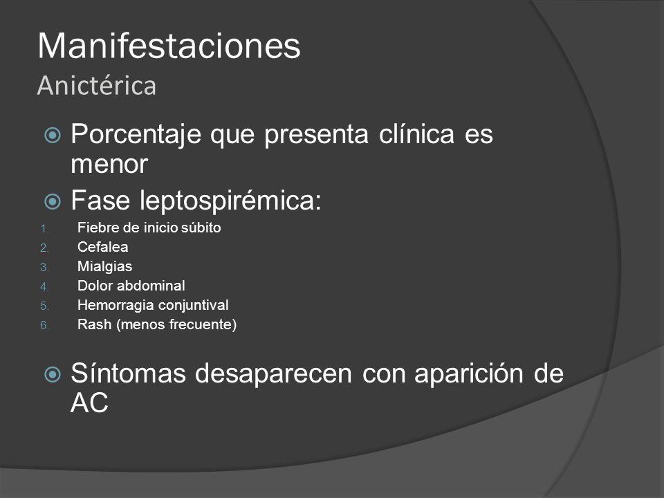 Manifestaciones Anictérica Porcentaje que presenta clínica es menor Fase leptospirémica: 1. Fiebre de inicio súbito 2. Cefalea 3. Mialgias 4. Dolor ab