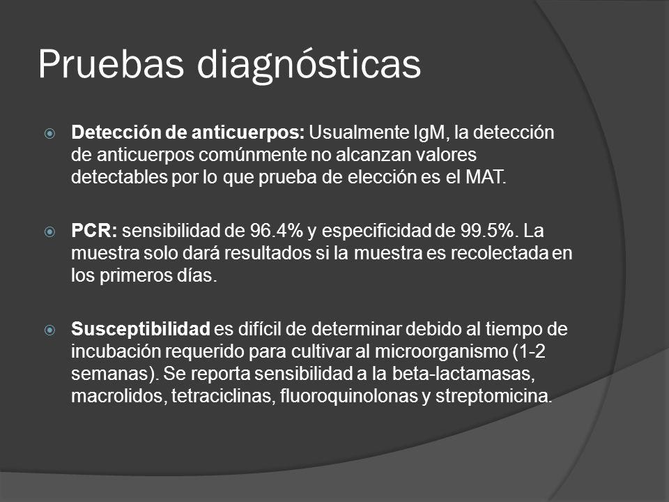 Pruebas diagnósticas Detección de anticuerpos: Usualmente IgM, la detección de anticuerpos comúnmente no alcanzan valores detectables por lo que prueb