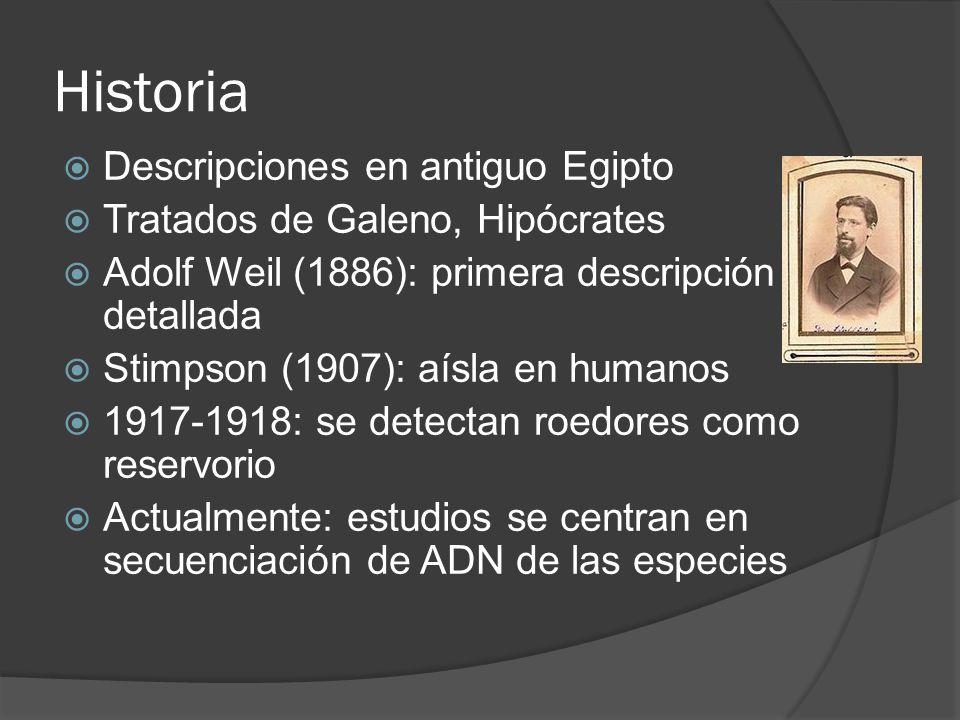Historia Descripciones en antiguo Egipto Tratados de Galeno, Hipócrates Adolf Weil (1886): primera descripción detallada Stimpson (1907): aísla en hum