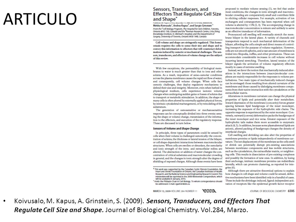 ARTICULO Koivusalo, M. Kapus, A. Grinstein, S. (2009). Sensors, Transducers, and Effectors That Regulate Cell Size and Shape. Journal of Biological Ch