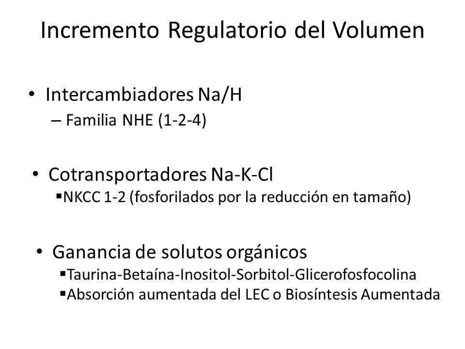 Incremento Regulatorio del Volumen Intercambiadores Na/H – Familia NHE (1-2-4) Cotransportadores Na-K-Cl NKCC 1-2 (fosforilados por la reducción en ta
