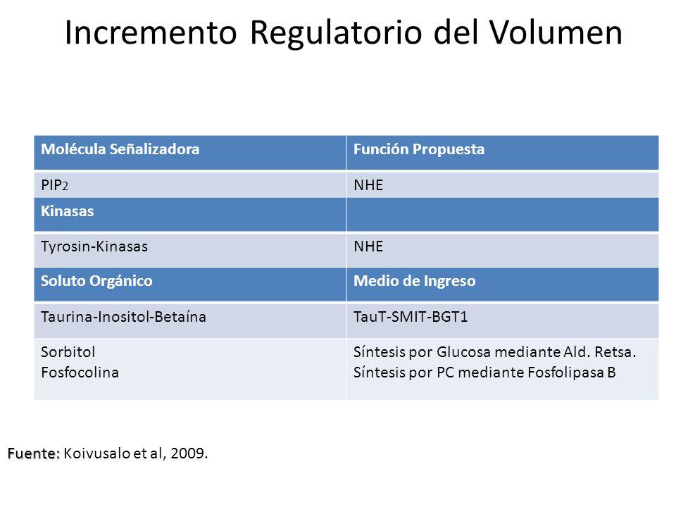 Incremento Regulatorio del Volumen Molécula SeñalizadoraFunción Propuesta PIP 2 NHE Kinasas Tyrosin-KinasasNHE Ser/Thr-KinasasNHE NKCC Soluto Orgánico