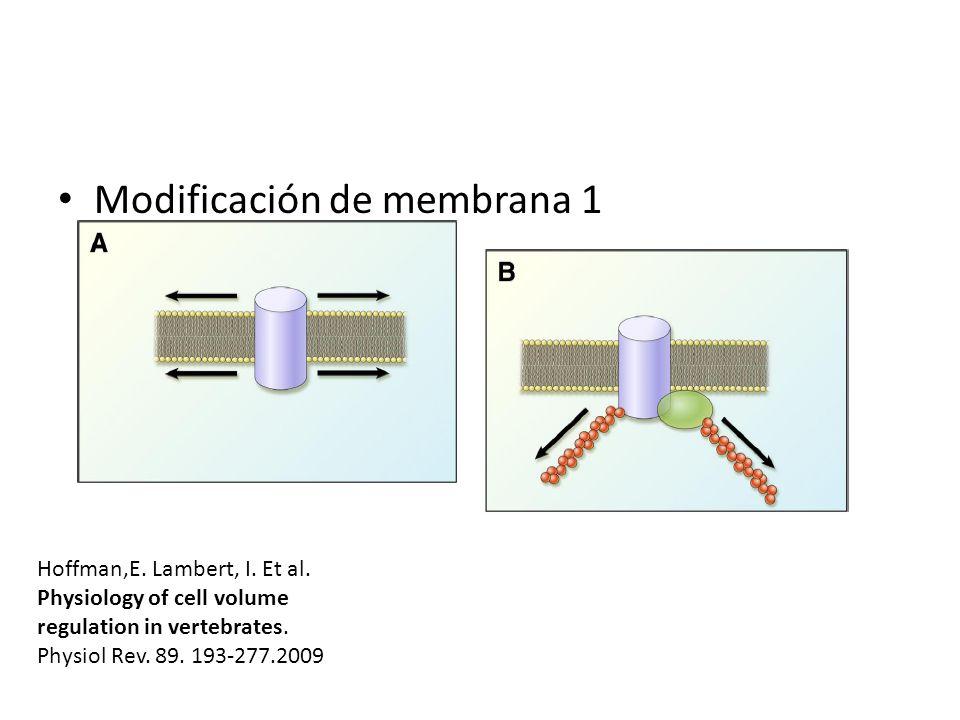 Modificación de membrana 1 Hoffman,E. Lambert, I. Et al. Physiology of cell volume regulation in vertebrates. Physiol Rev. 89. 193-277.2009