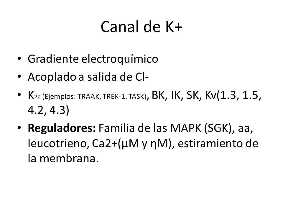 Canal de K+ Gradiente electroquímico Acoplado a salida de Cl- K 2P (Ejemplos: TRAAK, TREK-1, TASK), BK, IK, SK, Kv(1.3, 1.5, 4.2, 4.3) Reguladores: Fa