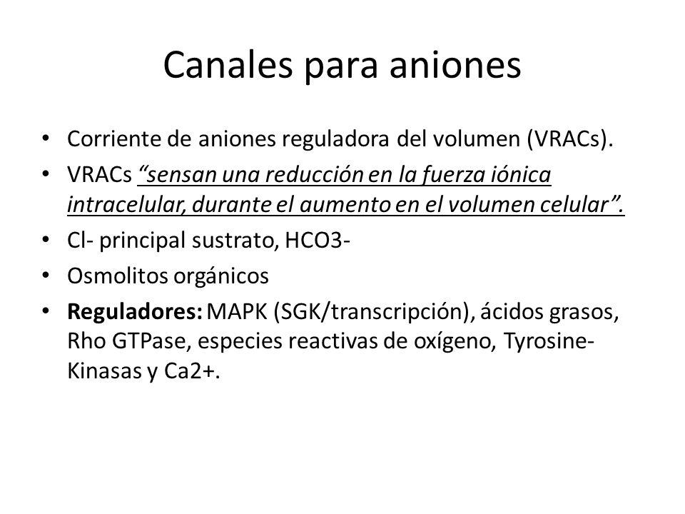 Canales para aniones Corriente de aniones reguladora del volumen (VRACs). VRACs sensan una reducción en la fuerza iónica intracelular, durante el aume
