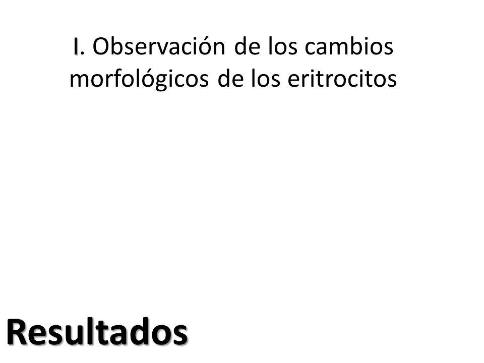 I I. Observación de los cambios morfológicos de los eritrocitos Resultados