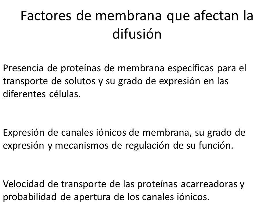 Factores de membrana que afectan la difusión Presencia de proteínas de membrana específicas para el transporte de solutos y su grado de expresión en l