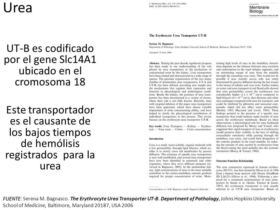 UT-B es codificado por el gene Slc14A1 ubicado en el cromosoma 18 Este transportador es el causante de los bajos tiempos de hemólisis registrados para