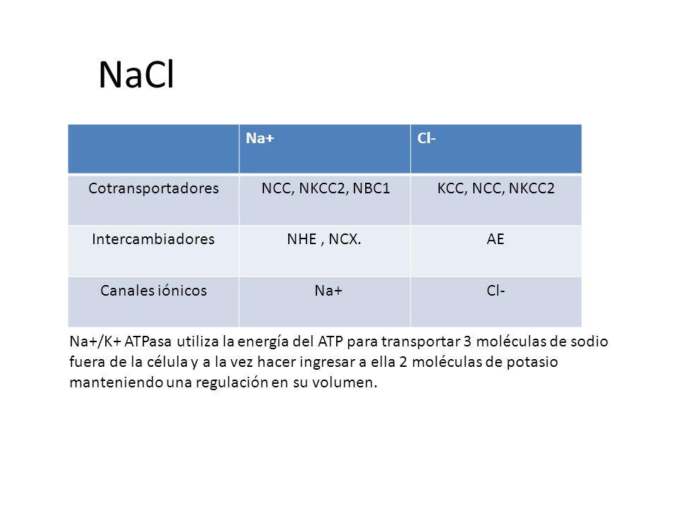 NaCl Na+Cl- Cotransportadores NCC, NKCC2, NBC1KCC, NCC, NKCC2 IntercambiadoresNHE, NCX.AE Canales iónicos Na+Cl- Na+/K+ ATPasa utiliza la energía del