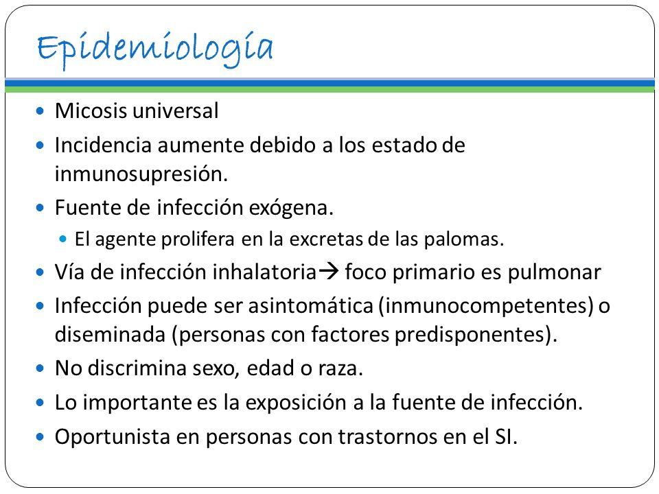 Epidemiología Micosis universal Incidencia aumente debido a los estado de inmunosupresión. Fuente de infección exógena. El agente prolifera en la excr