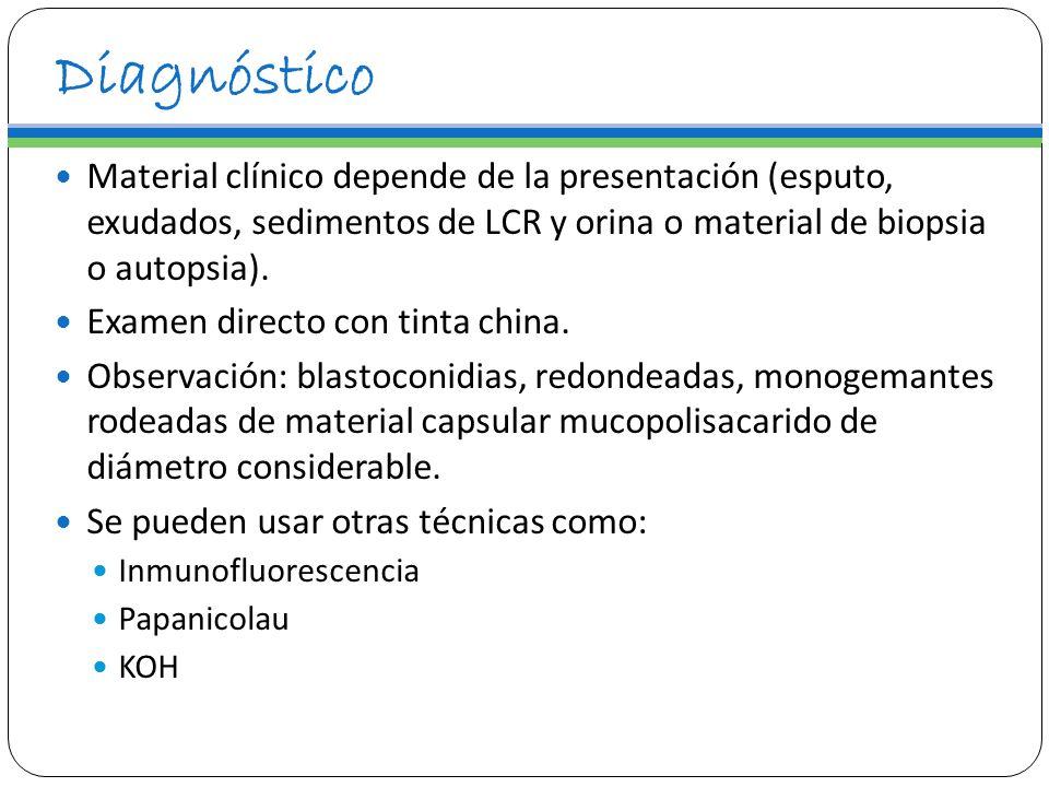 Diagnóstico Material clínico depende de la presentación (esputo, exudados, sedimentos de LCR y orina o material de biopsia o autopsia). Examen directo