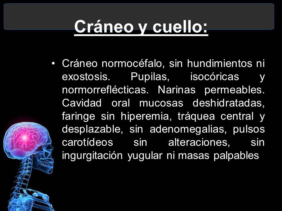 Cráneo y cuello: Cráneo normocéfalo, sin hundimientos ni exostosis. Pupilas, isocóricas y normorreflécticas. Narinas permeables. Cavidad oral mucosas