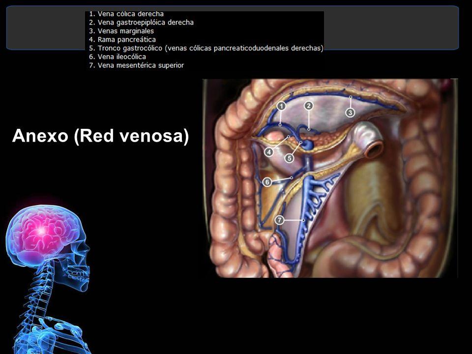 Anexo (Red venosa)