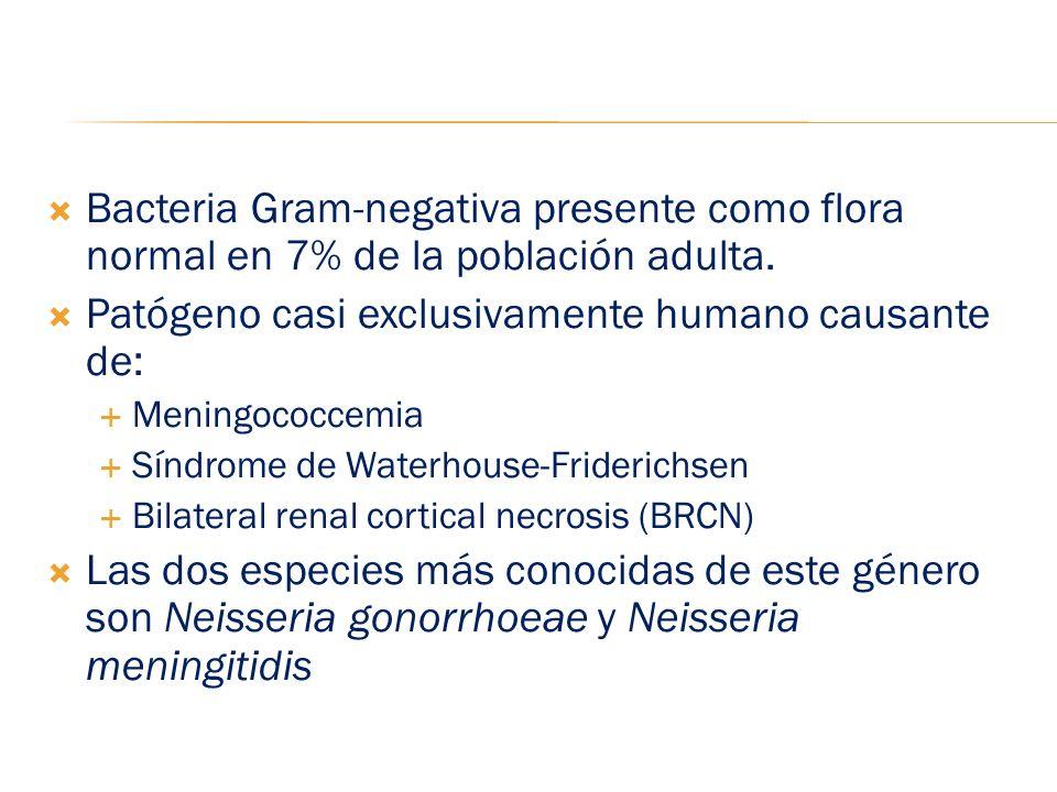 Bacteria Gram-negativa presente como flora normal en 7% de la población adulta. Patógeno casi exclusivamente humano causante de: Meningococcemia Síndr