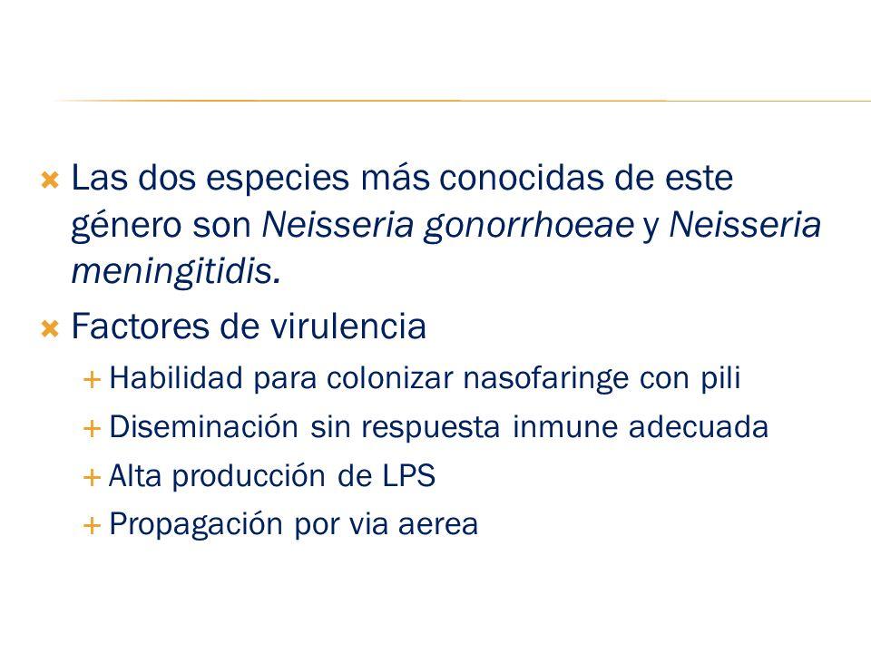 Las dos especies más conocidas de este género son Neisseria gonorrhoeae y Neisseria meningitidis. Factores de virulencia Habilidad para colonizar naso