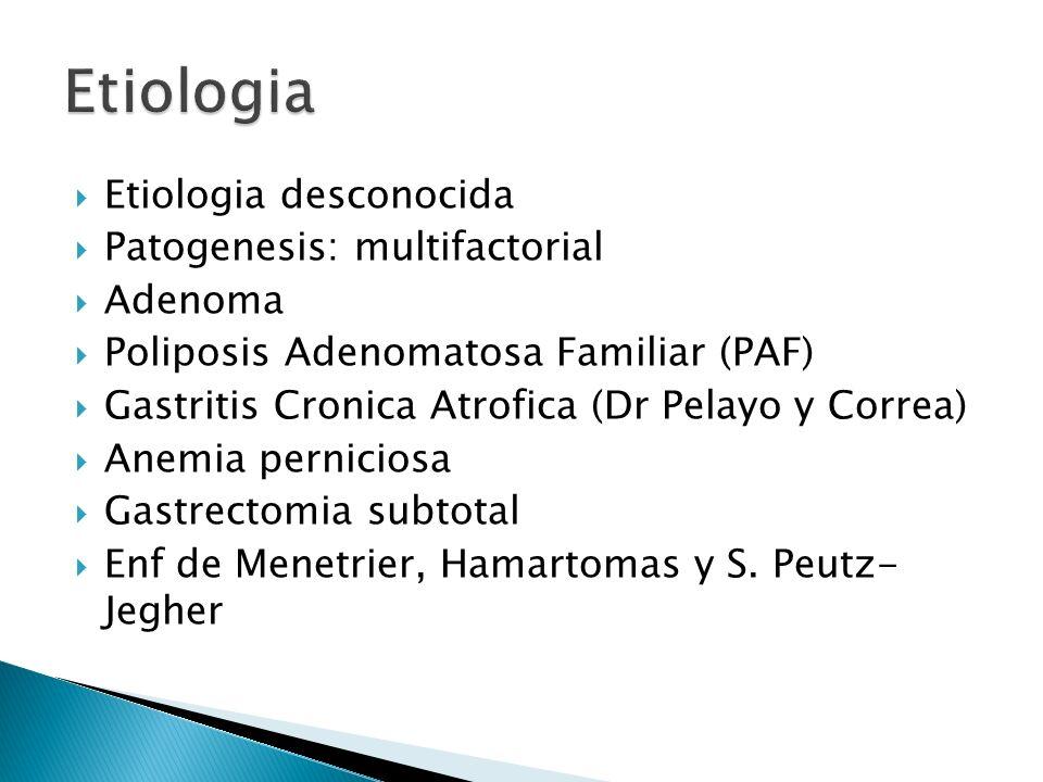Etiologia desconocida Patogenesis: multifactorial Adenoma Poliposis Adenomatosa Familiar (PAF) Gastritis Cronica Atrofica (Dr Pelayo y Correa) Anemia