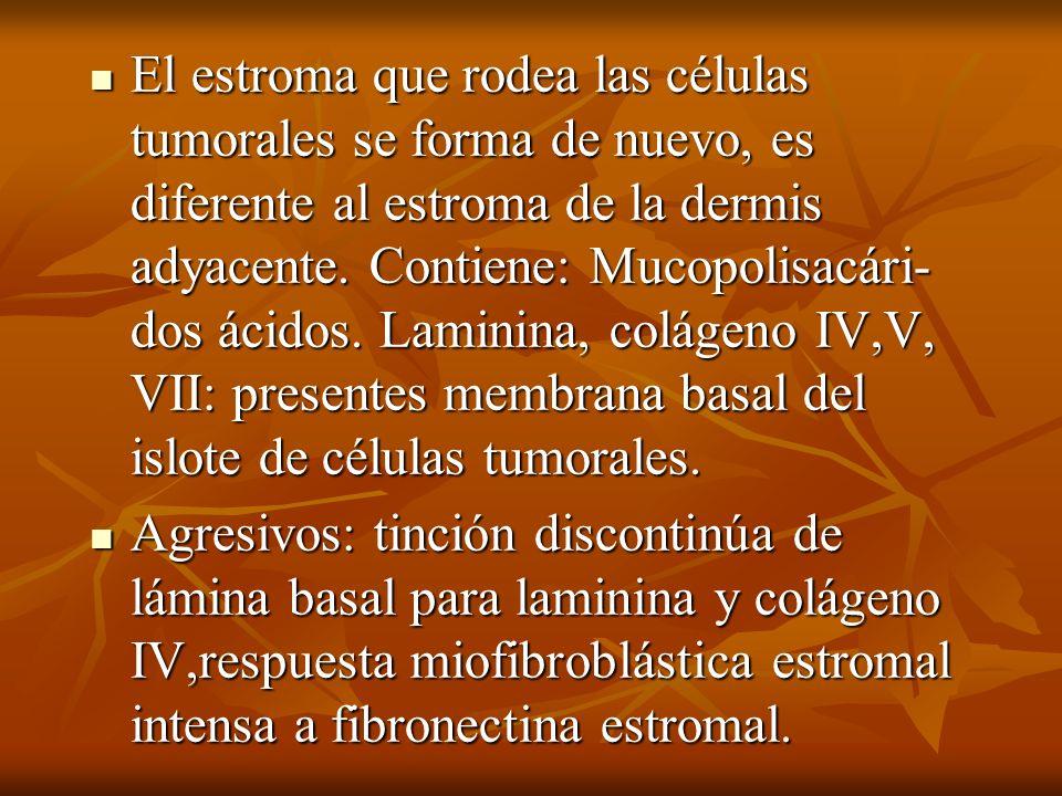 El estroma que rodea las células tumorales se forma de nuevo, es diferente al estroma de la dermis adyacente. Contiene: Mucopolisacári- dos ácidos. La