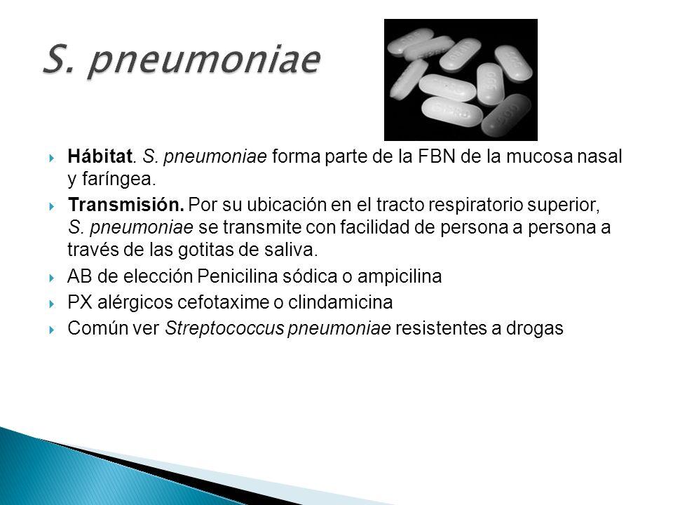 Hábitat. S. pneumoniae forma parte de la FBN de la mucosa nasal y faríngea. Transmisión. Por su ubicación en el tracto respiratorio superior, S. pneum