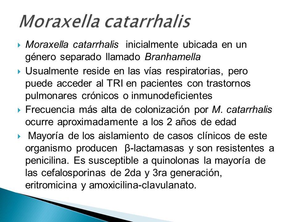 Moraxella catarrhalis inicialmente ubicada en un género separado llamado Branhamella Usualmente reside en las vías respiratorias, pero puede acceder a