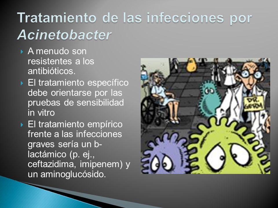 A menudo son resistentes a los antibióticos. El tratamiento específico debe orientarse por las pruebas de sensibilidad in vitro El tratamiento empíric