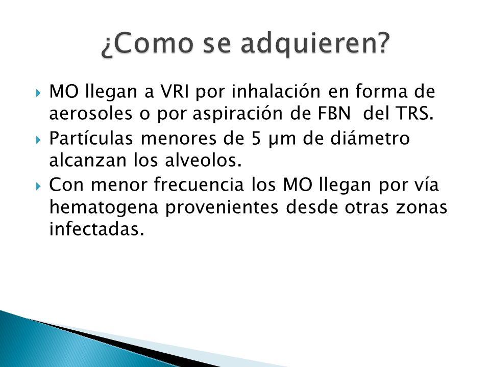MO llegan a VRI por inhalación en forma de aerosoles o por aspiración de FBN del TRS. Partículas menores de 5 µm de diámetro alcanzan los alveolos. Co