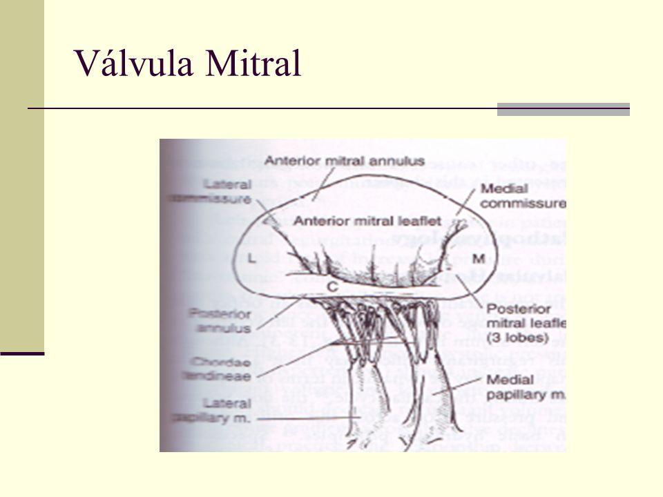 Válvula Mitral