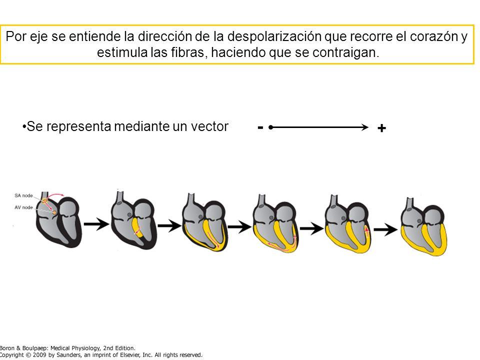 Por eje se entiende la dirección de la despolarización que recorre el corazón y estimula las fibras, haciendo que se contraigan. Se representa mediant
