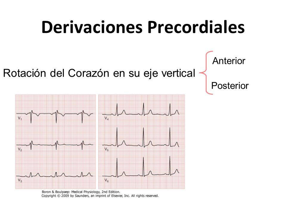 Derivaciones Precordiales Rotación del Corazón en su eje vertical Anterior Posterior