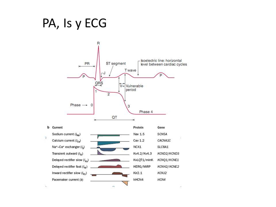 PA, Is y ECG