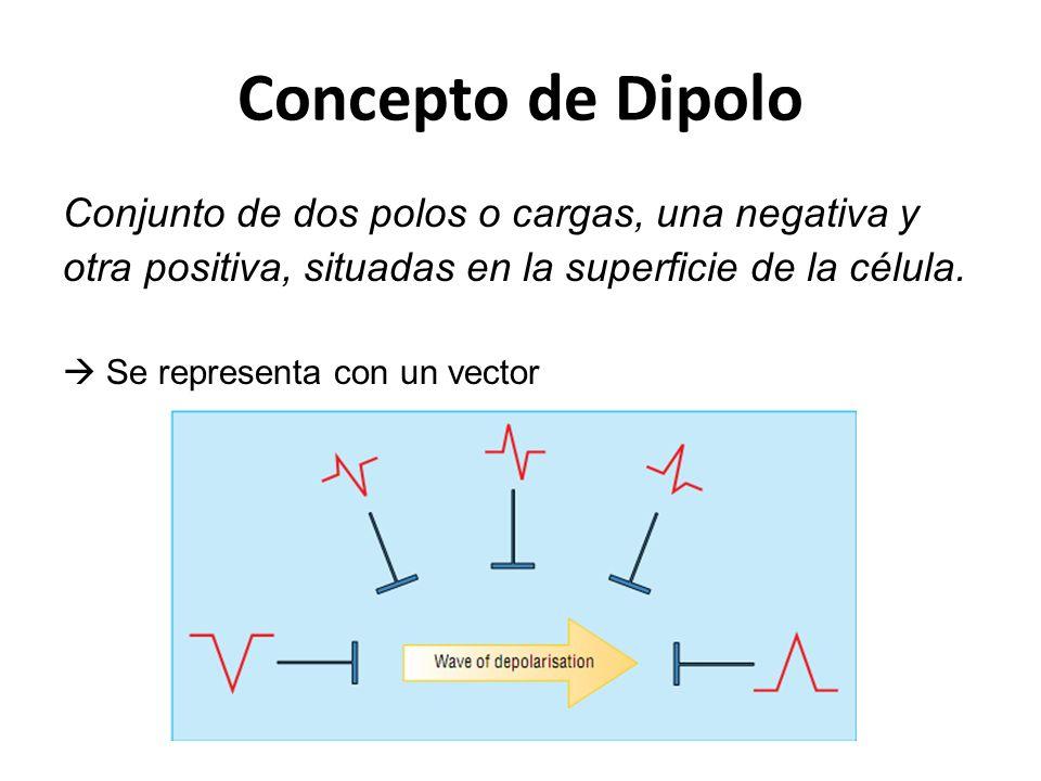 Concepto de Dipolo Conjunto de dos polos o cargas, una negativa y otra positiva, situadas en la superficie de la célula. Se representa con un vector